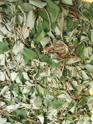 这是一张关于鱼腥草根的产品图片