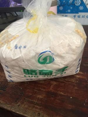 四川省成都市双流县黄金针菇 15~20cm 1.2~1.5cm