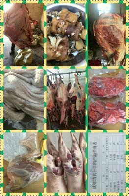甘肃省白银市会宁县牛肉类 生肉