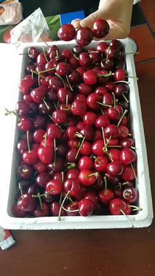 这是一张关于红灯樱桃 15-20mm 5-8g的产品图片