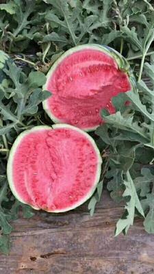 这是一张关于8424西瓜 有籽 1茬 8成熟 7斤打底的产品图片
