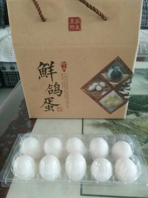 山东省青岛市平度市肉鸽蛋 食用 箱装