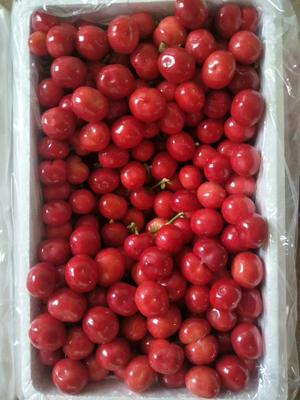 这是一张关于红灯樱桃 24-26mm 5-8g的产品图片
