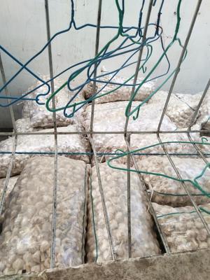 这是一张关于紫皮大蒜 4.5cm 多瓣蒜的产品图片