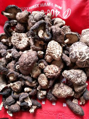 四川省达州市万源市椴木菇 散装 1年