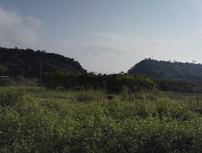 云南省昆明市盘龙区重阳木