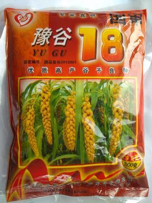 小米种子 大田用种 ≥99% ≥98% ≥85% ≤10%