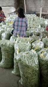 广西壮族自治区来宾市兴宾区白花四季豆 12cm以上