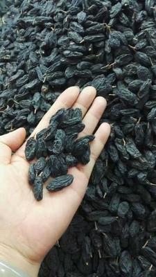 新疆维吾尔自治区吐鲁番地区托克逊县黑加仑葡萄干 优等