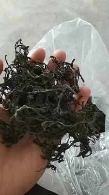 湖北省襄阳市南漳县红香椿芽 露天种植 散装 一级