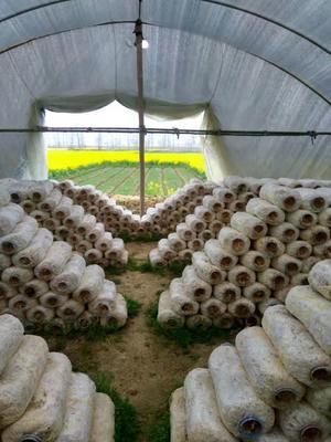 这是一张关于蘑菇的产品图片