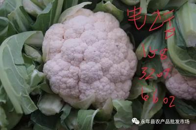 河北省邯郸市永年县白花菜花 紧密 2~3斤 乳白色