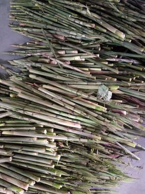 这是一张关于野生竹笋 21~25cm 鲜笋的产品图片