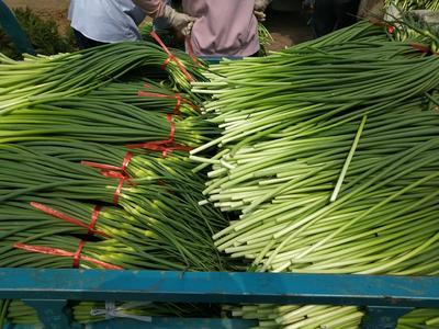这是一张关于苍山蒜薹 一茬 70cm以上 精品的产品图片