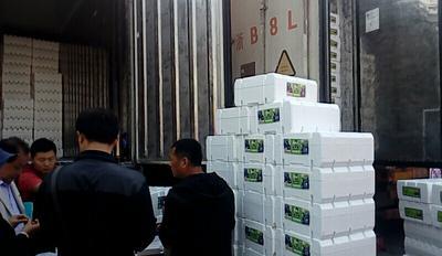 浙江省嘉兴市南湖区夏黑葡萄 5%以下 1次果 1.5- 2斤