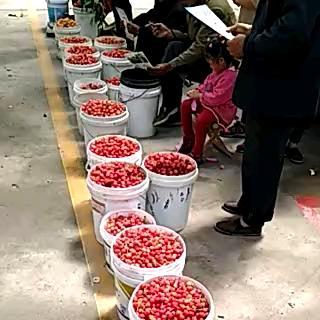 这是一张关于大樱桃 20mm以上 20g以上的产品图片