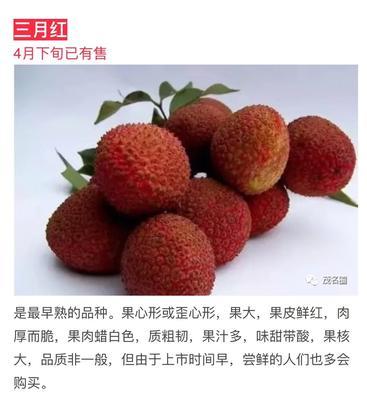 广东省茂名市高州市三月红荔枝 2cm
