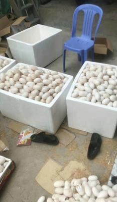 广西壮族自治区柳州市柳北区鳄鱼蛋 食用 礼盒装