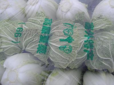 河南省商丘市夏邑县北京新三号白菜 6~10斤 净菜