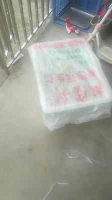 广东省揭阳市普宁市青竹梅 40-45g