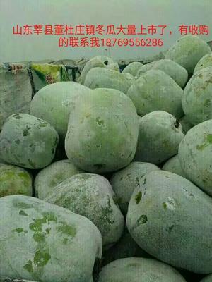 山东省聊城市莘县青皮冬瓜 2斤以上 白霜