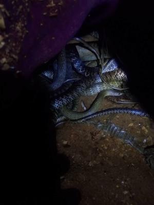 广西壮族自治区玉林市北流市水律蛇