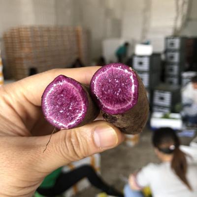 广西壮族自治区南宁市江南区富硒紫薯 2两以下