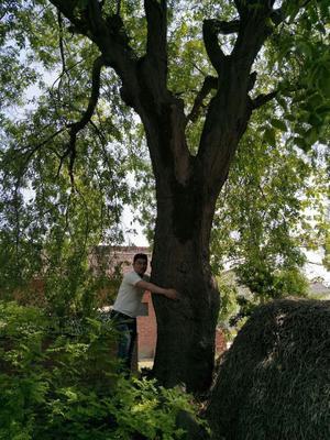 陕西省宝鸡市渭滨区皂角树