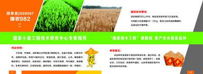 河南省安阳市滑县小麦种子