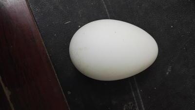 湖北省黄冈市团风县鲜鹅蛋 食用 散装