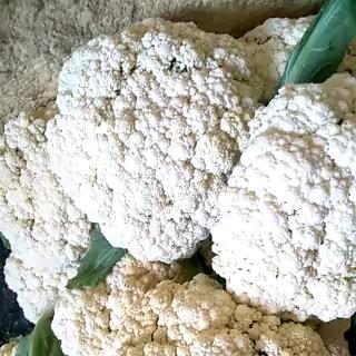 江苏省徐州市铜山区白面青梗松花菜 松散 1~2斤 乳白色
