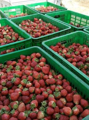 山东省临沂市平邑县美13草莓 20克以下