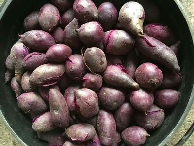 广西壮族自治区崇左市凭祥市越南紫薯 2两以下