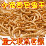 河南省郑州市二七区黄粉虫