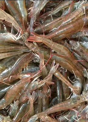 广东省汕头市潮阳区南美白对虾 人工殖养 2钱以下