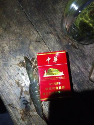 江苏省南通市如东县南美白对虾 人工殖养 3-5钱
