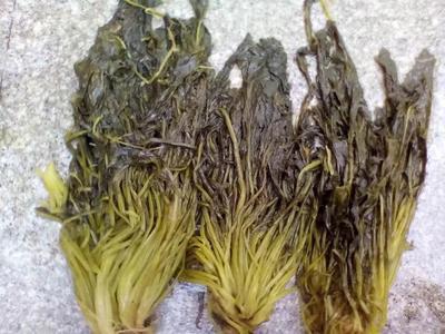 江苏省盐城市东台市雪菜泡菜
