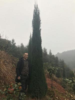 湖南省衡阳市衡东县塔柏