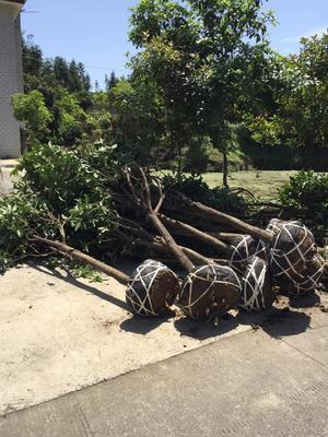 湖南省永州市东安县木质工具