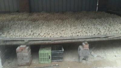 河南省洛阳市涧西区松花鸡蛋