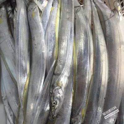 福建省漳州市诏安县东海带鱼 野生 0.5公斤以下