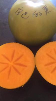 江西省赣州市瑞金市大秋甜柿 4 - 5两以上