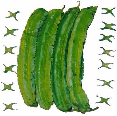 广西壮族自治区贺州市八步区长寿翼豆 8cm以上
