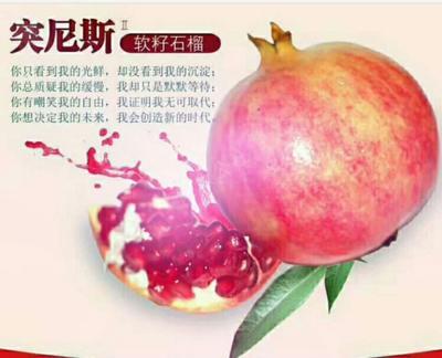 四川省凉山彝族自治州会理县突尼斯软籽石榴 0.6 - 0.8斤