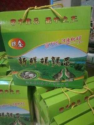 陕西省咸阳市淳化县黄羽鹌鹑蛋 孵化 礼盒装
