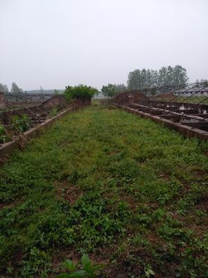江苏省徐州市新沂市蘑菇