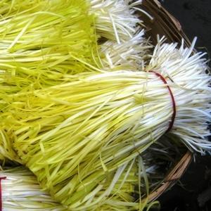 江苏省苏州市常熟市黄韭芽 头茬 20~30cm