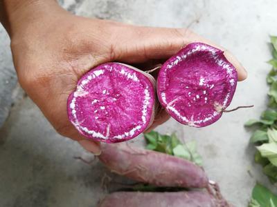 广东省揭阳市惠来县越南紫薯 3两以上