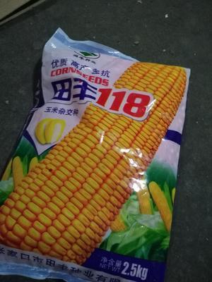 河北省张家口市万全县玉米种子