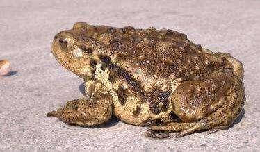 河南省三门峡市灵宝市青蛙